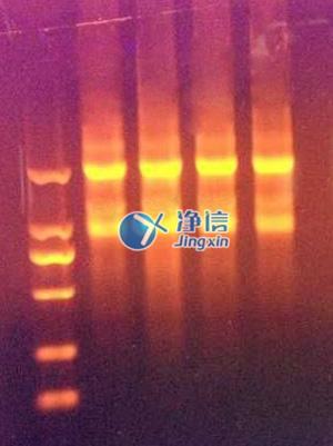 研磨仪快速提取动物组织中的总RNA实验